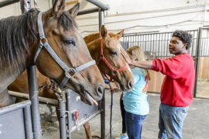 Students interact with horses in an Animal Science course.